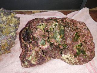 roca viva acuario marino
