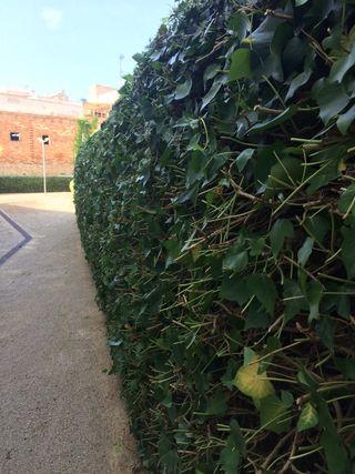 Puesta a punto jardin jardines jardinero