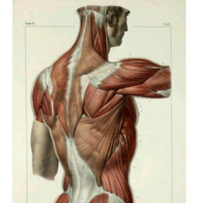 Clases de anatomía, fisiología, histo y biología en Getafe en WALLAPOP