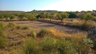 Parcela de Almendros en Pinoso