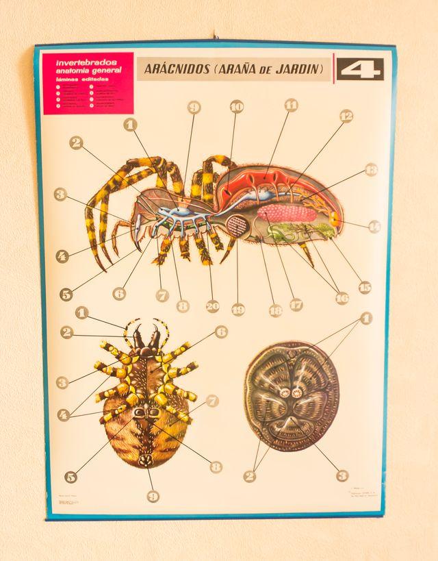 Lámina Invertebrados Anatomía General. Nº 4 de segunda mano por 25 ...