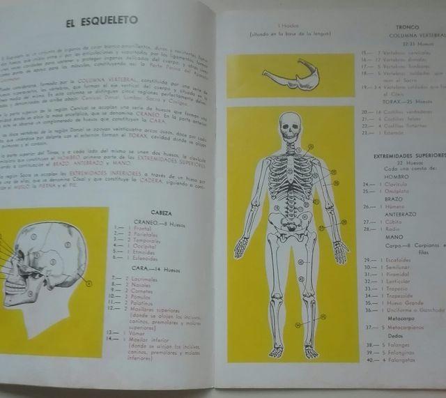 ANATOMIA HUMANA - MUJER/EMBARAZO de segunda mano por 26 € en A ...
