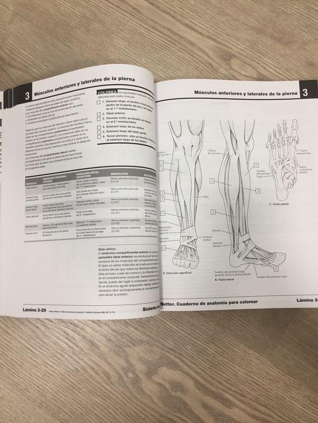 best Cuaderno De Anatomia Para Colorear Pdf Gratis image collection