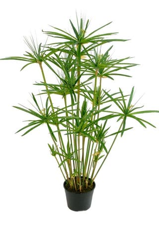 Planta artificial Papiro