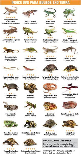 Se vende terrarios para reptiles