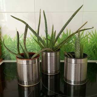 3 aloes