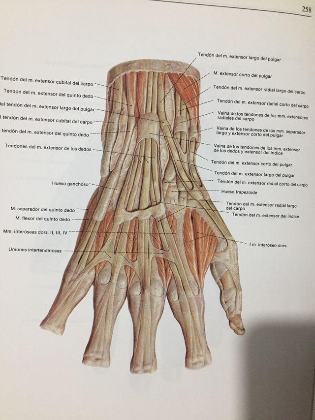 Atlas de anatomía humana Sobotta de segunda mano por 70 € en Madrid ...