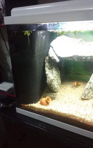 Biobox 2 filtro acuario