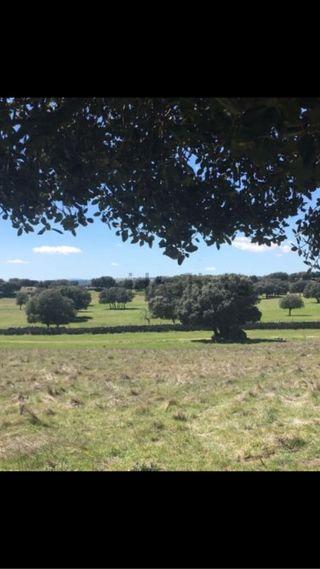 Terreno 7,5 hectáreas edificable Sierra norte de Madrid