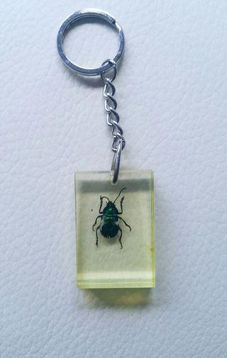 Llavero con insecto de un escarabajo verde real.