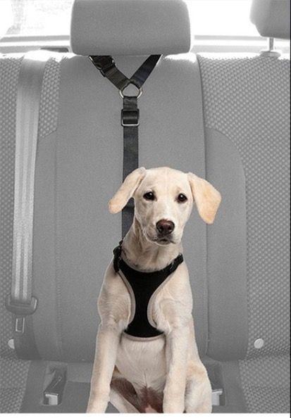Cinturón de seguridad de coche para perro