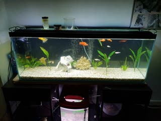 AQUARIUM 4F x 1F all included