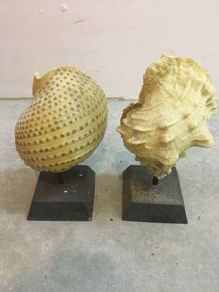 Figuras de Caracolas de mar