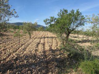 Parcela de terreno rústico con almendros y olivos