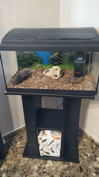 acuario de 55 litros