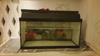 acuario pecera