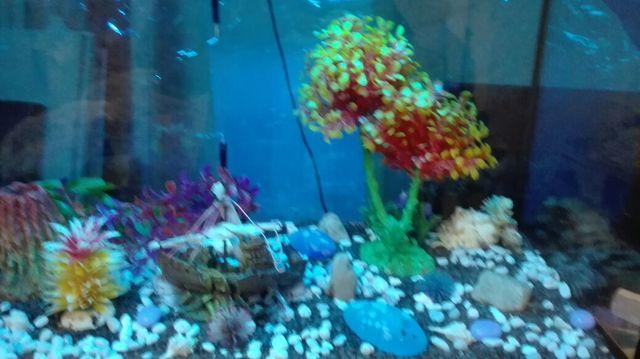 acuario 115litros