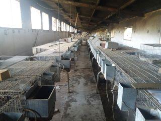 Venta de jaulas de conejos (estandard o para cria)