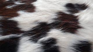 Alfombra de piel de vaca España
