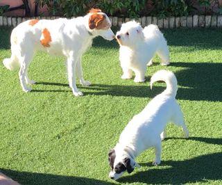 Residencia Familiar /Canguros de perros