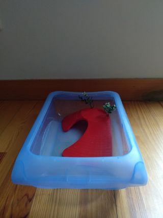 Caja para tortugas