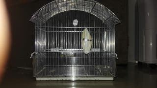 jaua para pájaro de acero inoxidable nueva