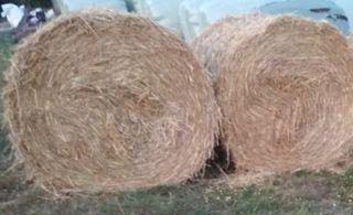 Véndese rolos de hierba seca hierba nueva.