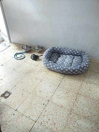 cama perro más complemento