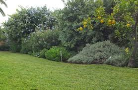 Mantenimiento de casas y jardines