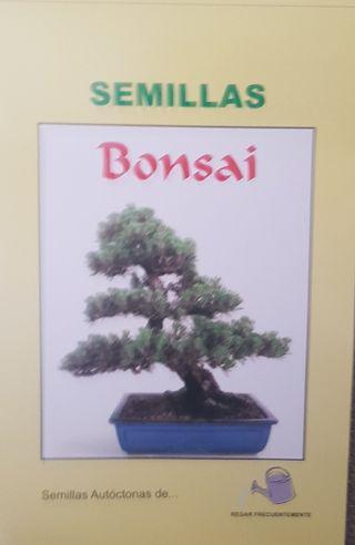 Bonsai De Segunda Mano En La Provincia De Asturias En Wallapop