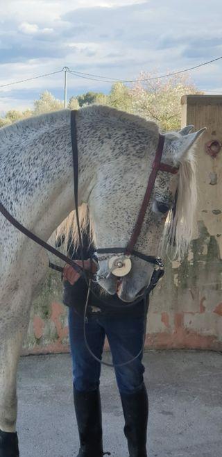 Clases equitación