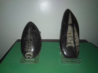 Fosiles pulidos marruecos