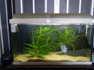 acuario 60 litros aquatlantis
