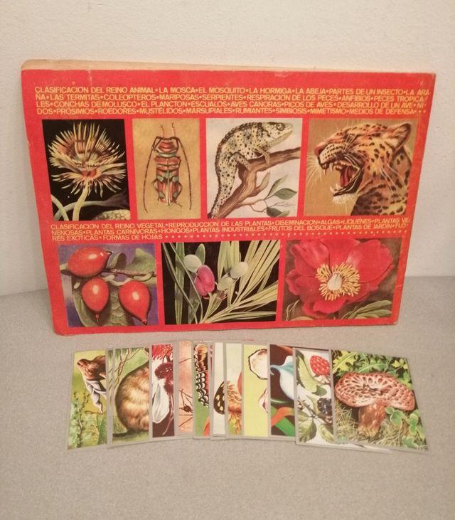 Zoología y botanica