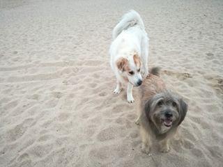 cuidado y canguro paseo perros