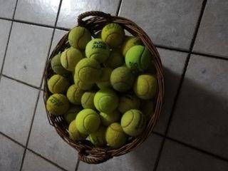 34 pelotas ideales para perros y gatos.
