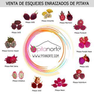 Venta esquejes enraizados de pitaya