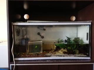 acuario 120l