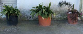 Planta y maceta