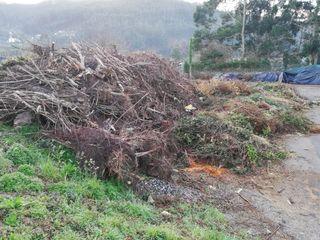 biomasa para pacas o astillar
