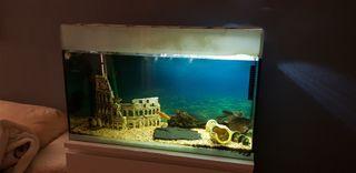 acuario 100 litros con filtro eheim e iluminación