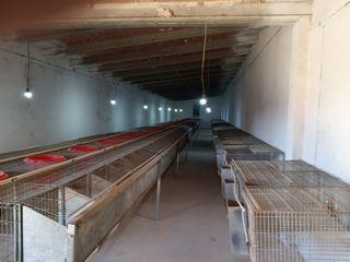 Jaulas para cria de conejos