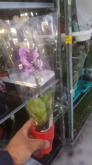 se vende todo tipos de plantas