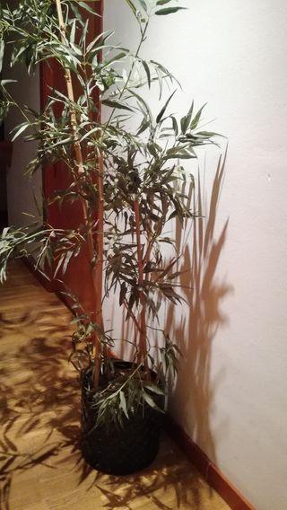 Planta con maceta