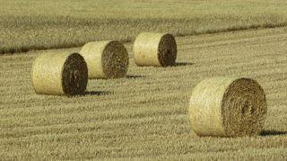 bolas rollos de hierba seca