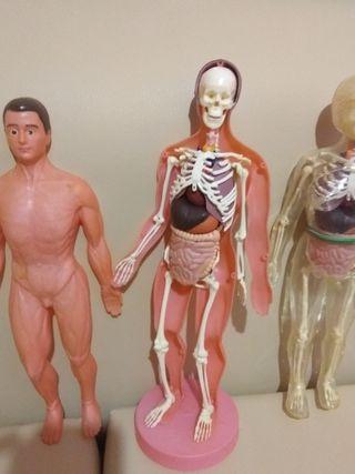 muñecos cuerpo humano