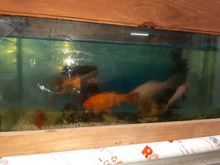 Pecera de 72x30x40 cm con peces