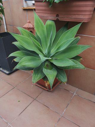 planta con macetero y plato