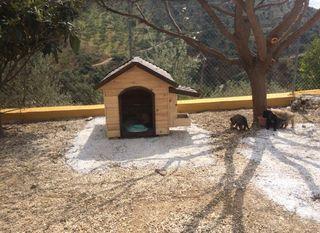 Caseta para perro en madera