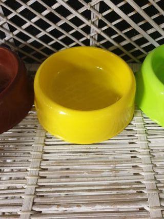dog bowls